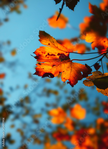 Recess Fitting Autumn Autumn background