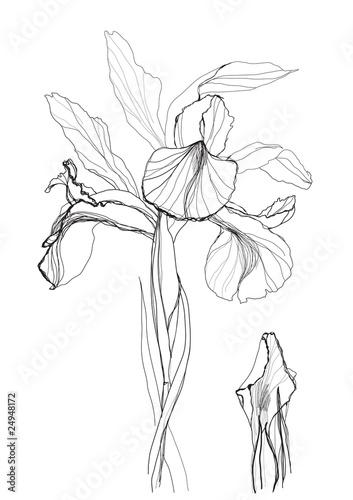 Tuinposter Abstract bloemen drawing iris