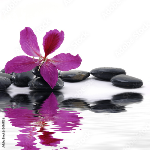 Fotobehang Spa : Reflection for black pebbles with beauty red flower