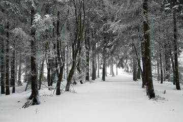 Zima w polskich gorach, Beskidach