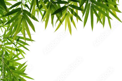In de dag Bamboo bamboo leaves