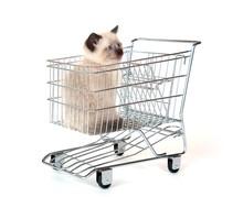 Cute Kitten Sitting In Shopping Cart