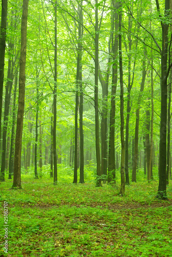 forest #25082707