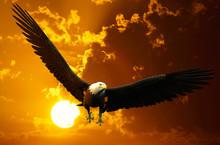 American Bald Eagle Sunset