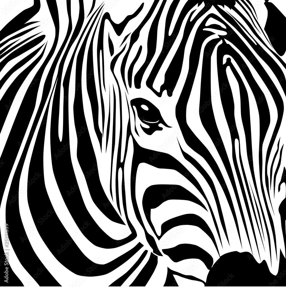 Fototapety, obrazy: Zebra