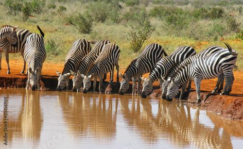 Cadres-photo bureau Bestsellers Branco di zebre