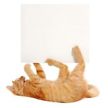 Blank Banner In Kitten's Paws