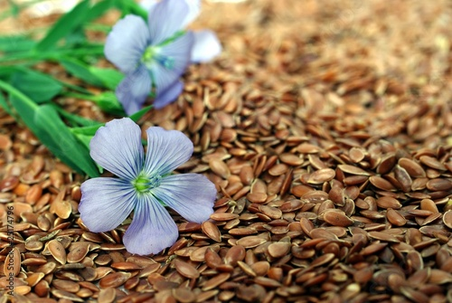 Obraz flax from blue flowers on seeds - fototapety do salonu
