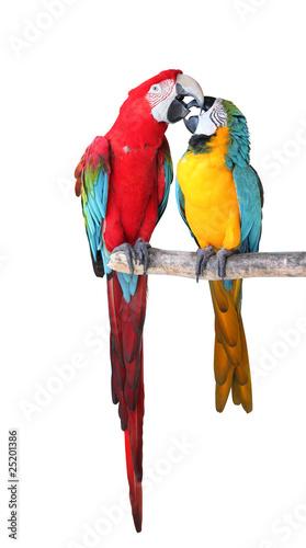 papageien pärchen - kaufen sie dieses foto und finden sie