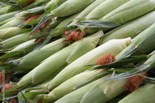 Valokuva  Rows of Corn