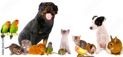 Foto  montage animaux