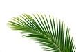 canvas print picture - palmenblatt