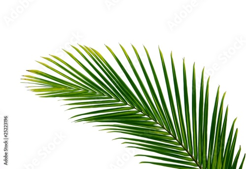 Canvas Prints Palm tree palmenblatt