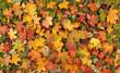 canvas print picture Colourful autumn background