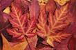 canvas print picture - Herbstlaub