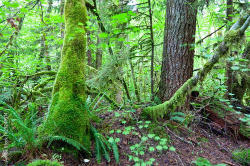 Naklejki dżungla  roslinnosc-dzungli