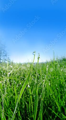 Deurstickers Gras grass with drops