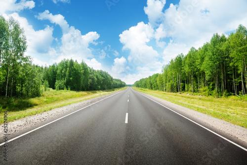 road in forest - fototapety na wymiar