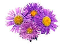 Four Asters