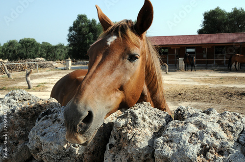 Fotografie, Obraz  cavallo da scuderia