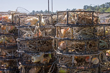Commercial Crab Pots