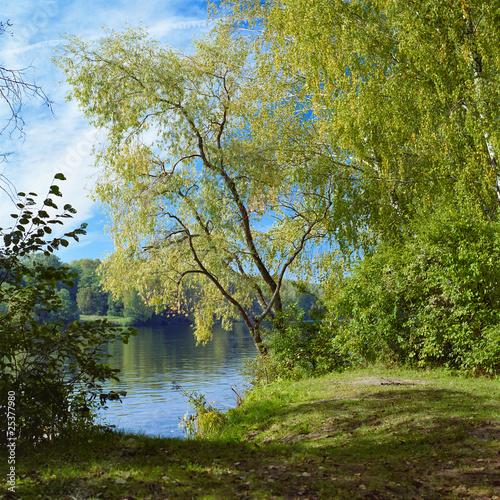 Fototapeta las wierzba-na-rzece-w-wczesnej-jesieni