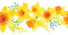 Seamless Horizontal Spring Daf...