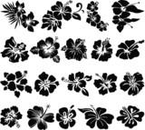 Fototapeta Kwiaty - Hibiscus flower silhouettes
