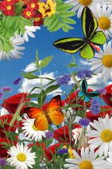 A beautiful garden illustration, flowers, butterflies