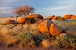 canvas print picture Granite boulders and trees, Namibia, southern Africa