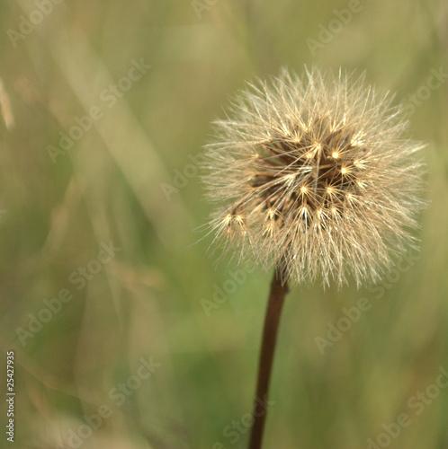 kwiat - 25427935