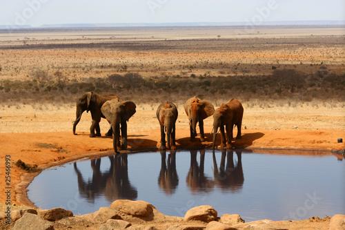 Spoed Foto op Canvas Marokko Elefanten am Wasserloch der Voi Safari Lodge