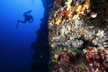 Fototapeta na wymiar mondo sottomarino