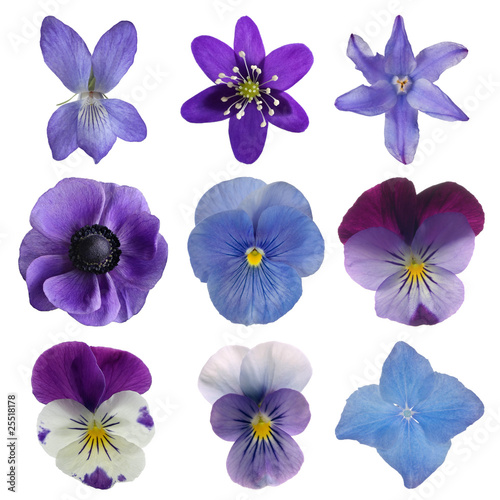Papiers peints Pansies Collection of blue flowers