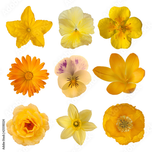 Papiers peints Pansies Collection of yellow/orange flowers
