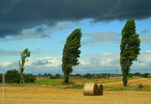 Photo  Windswept trees