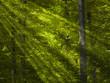 la lumière dans la forêt