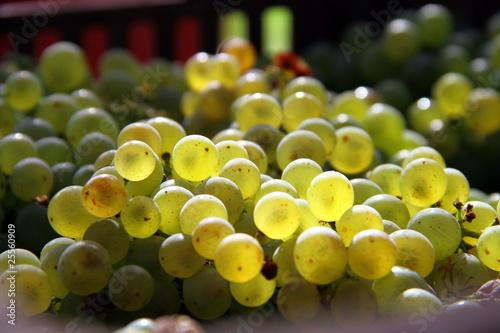 Grappes de raisin Chardonnay Fotobehang