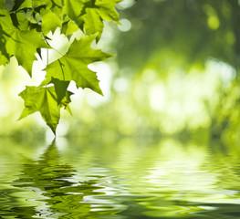 Panel Szklany Podświetlane Woda Krople Reflet de feuilles vertes dans l'eau - vert saturé et doux