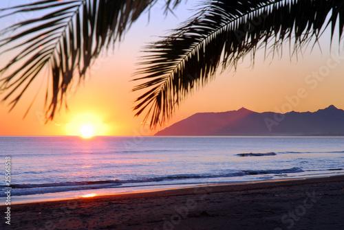 Valokuvatapetti tramonto sul mare con siluette di palma