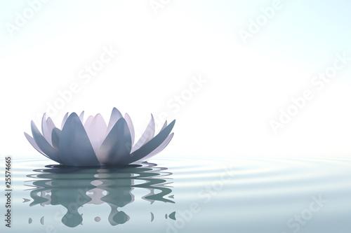 Zen flower loto in water - 25574665