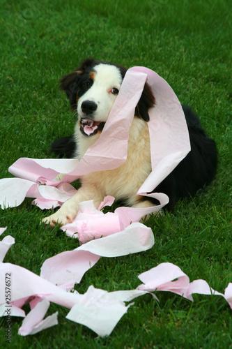 chien bêtise Canvas Print