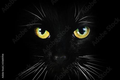 Carta da parati black cat