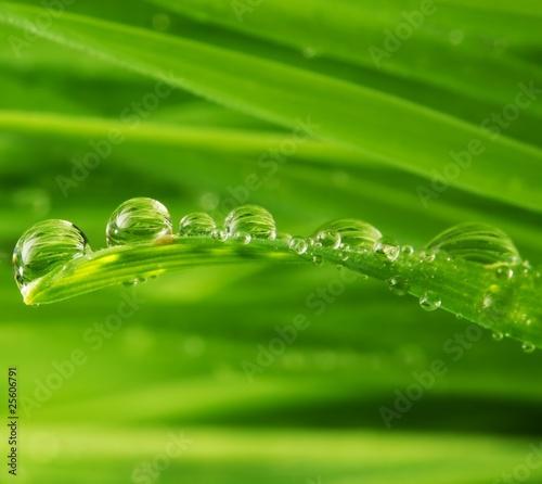swieza-zielona-trawa-z-woda-opuszcza-na-nim