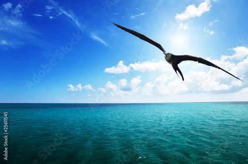 albatross and caribbean sea Canvas-taulu