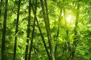 Fototapeta Do gastronomi Bamboo forest.