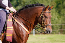 Pferd - Spanier