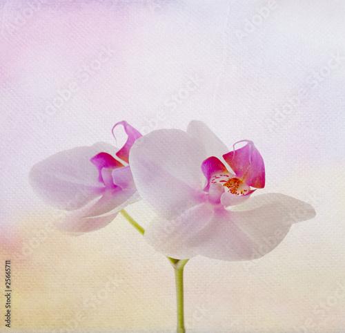 miekka-karta-z-kwiatem-orchidei