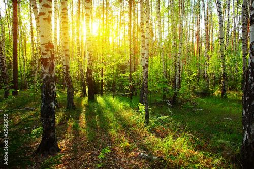 Deurstickers Berkbosje Forest
