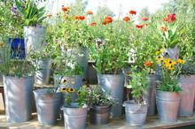 Blumentöpfe Auf Bank